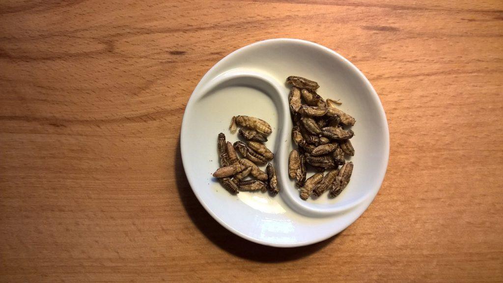insectos alimentacion